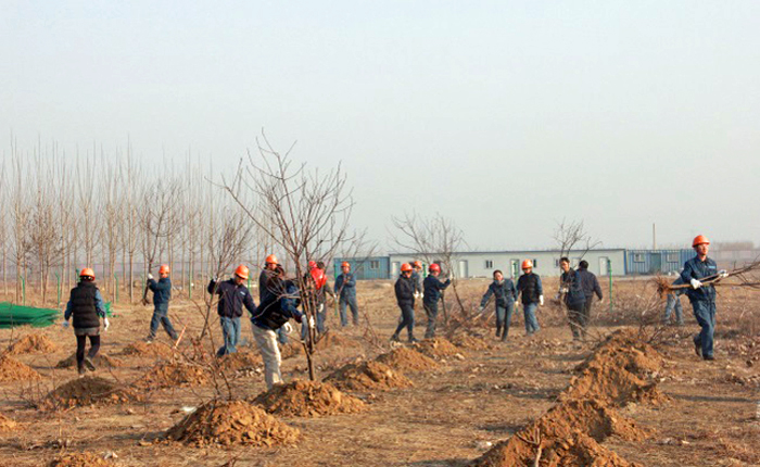Group planting trees